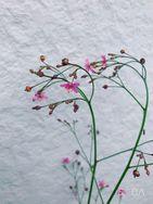 力強く。それなのにかわいいお花。